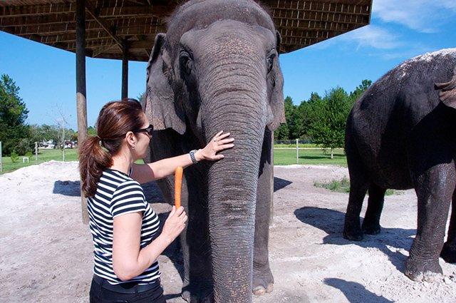 Florida elephant preserve