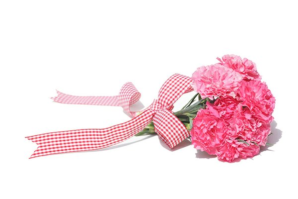 pink carnations with ribbon