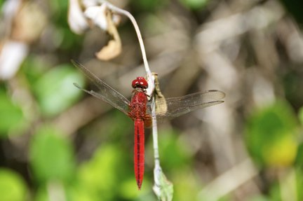 bug at gardens