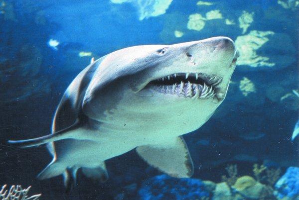 SHARK mote aquarium.jpg