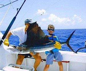 Martin County Sailfish