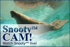 Snooty Cam Manatee