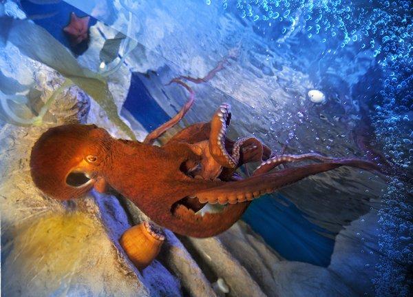 Tampa Octopus