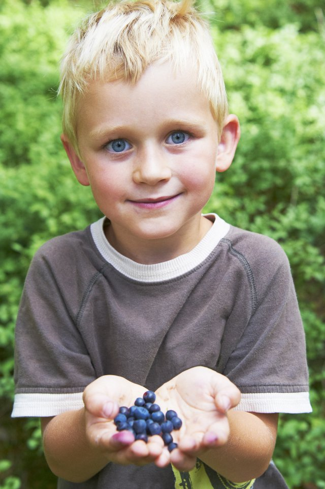 little boy blueberries