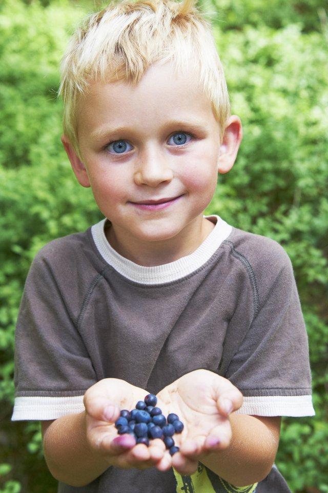 little boy blueberries