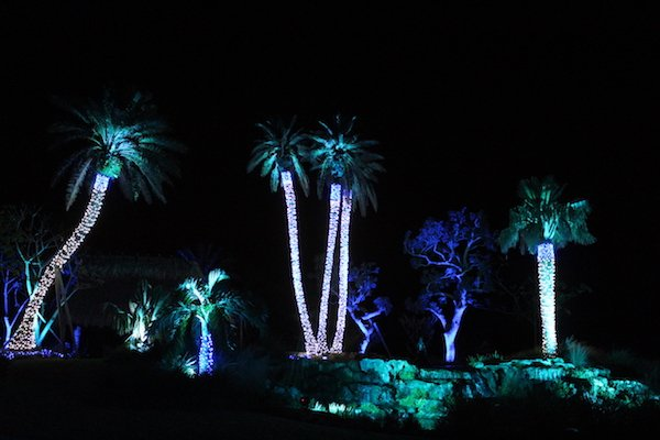 Botanical Gardens Night Lights 2
