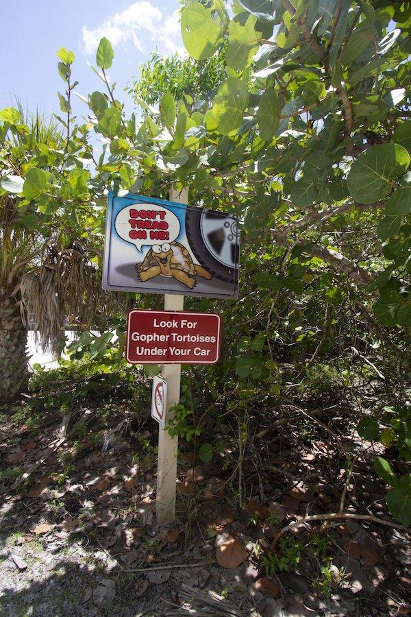 Barefoot Beach Tortoises