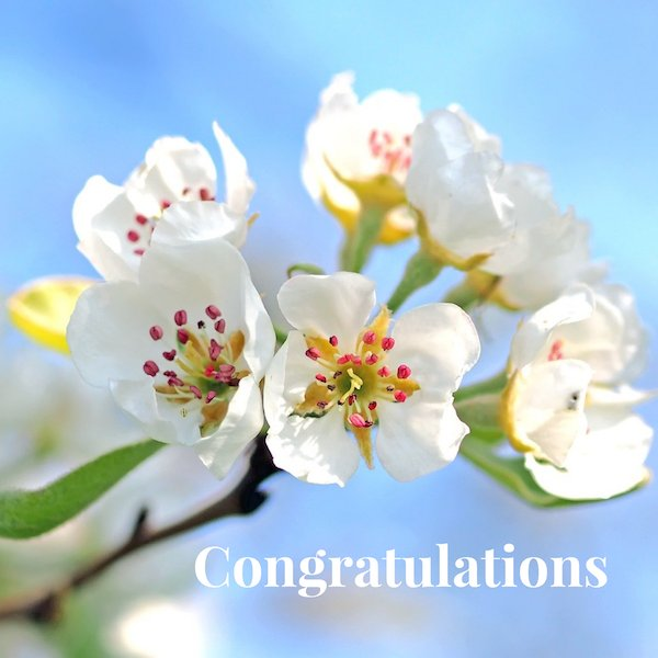 congratulations apple blossom
