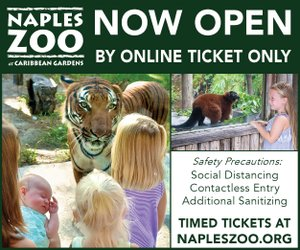 Zoo July 2020