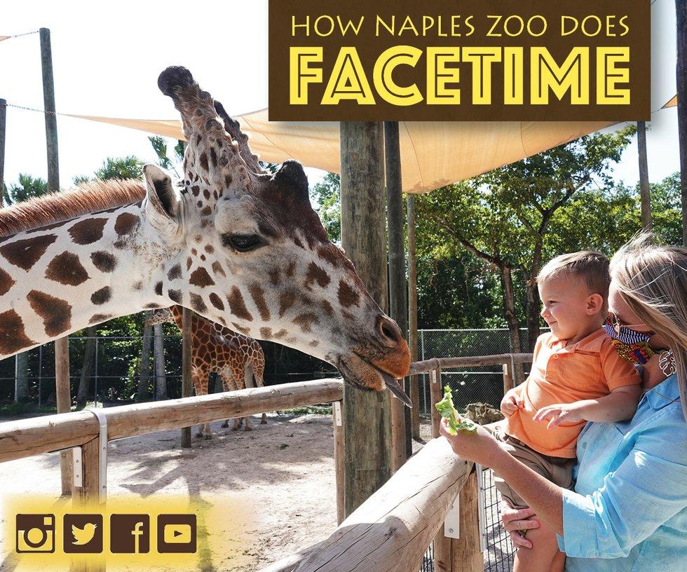 Zoo Giraffe 2020