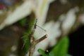 Corkscrew bug on boardwalk