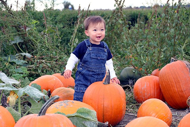 little boy in pumpkin patch