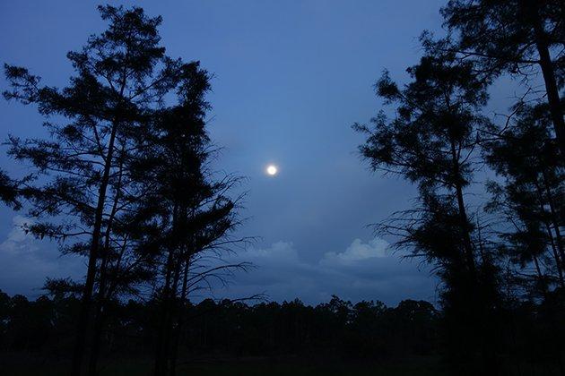 Corkscrew Swamp at night